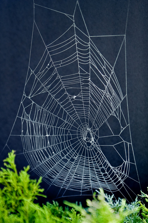 Make spider web art activity for Arts and craft websites