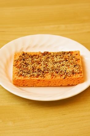 plant an indoor sponge garden activity
