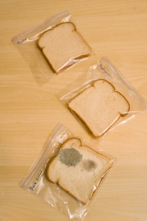 Science fair research paper bread mold