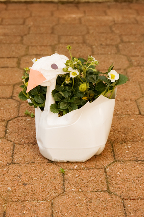 Craft a Swan Plant Container
