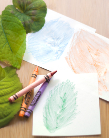 Leaf Rubbing Activity Education
