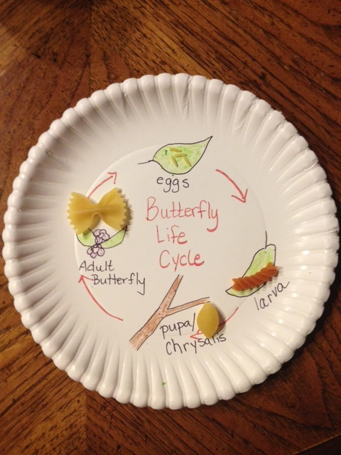 Butterfly Life Cycle Activity Education Com