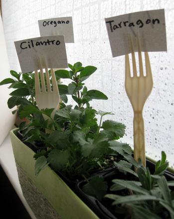 Indoor Herb Garden Activity