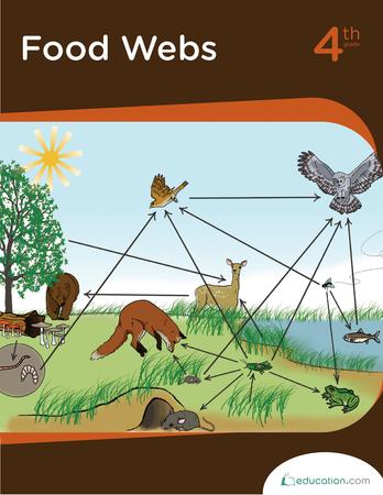 Food Webs Workbook Education Com