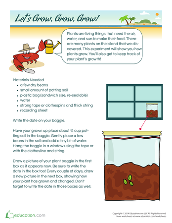 Second Grade Worksheets and Printables  Educationcom
