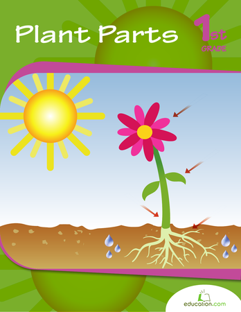 Plant Parts Workbook on Sunlight Worksheet Kindergarten